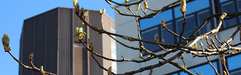 Frühling auf dem Campus, Bild 2