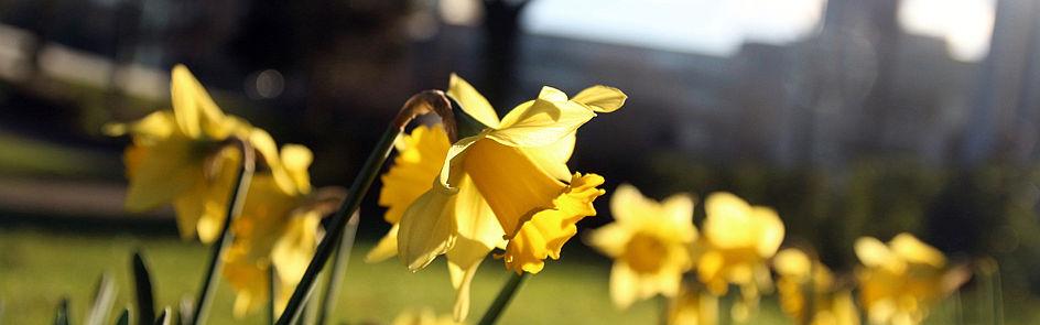 Frühling auf dem Campus, Bild 3