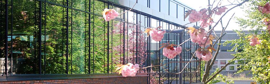 Frühling auf dem Campus, Bild 4